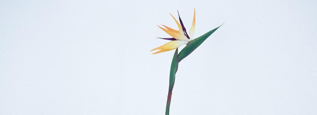 und kreative Blüten treiben,
